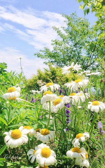 at Mt.Hiei garden museum Flowerporn Flower Collection EyeEm Nature Lover EyeEmBestPics