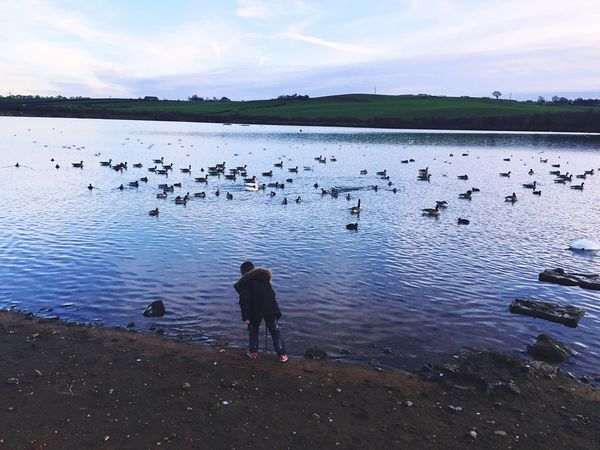 Ducks Animals In The Wild Water Bird Wildlife Tranquility Dusk Nature Boy And Nature Nature Lover EyeEm Nature Lover EyeEm Birds