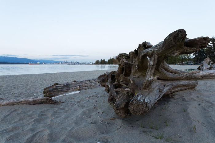 Catching a brief sunset over Sushi while looking back at Vancouver's downtown core Beach Beauty In Nature City Day Dead Tree Dusk Locarno Nature No People Outdoors Scenics Sky Sunset Tranquil Scene Tranquility Travel Destinations Tree Water