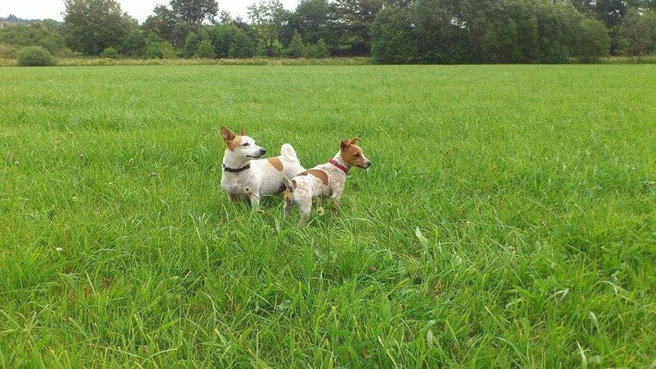grass, dog, domestic animals, animal themes, pets, mammal, green color, field, nature, growth, outdoors, day, tree, one animal, no people, beauty in nature