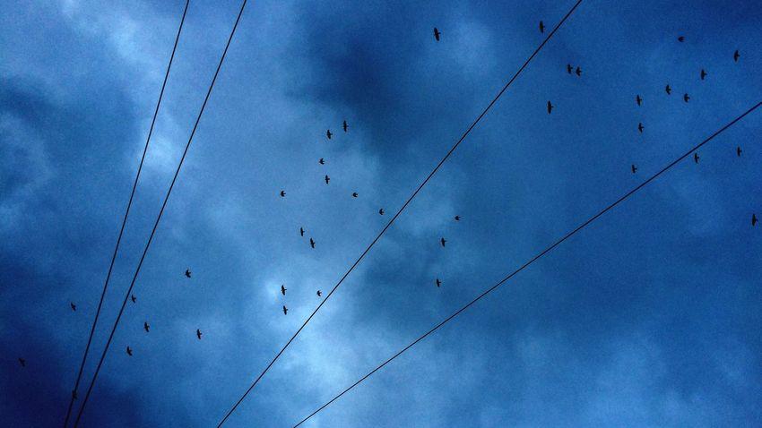 Berlin SNAPSHOTS Blue Sky Birds Swarm Of Birds Directly Above In The Sky