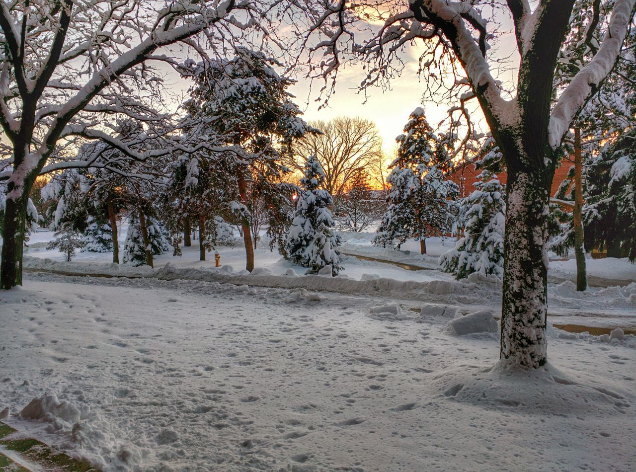 Snow covered trees on field during sunset