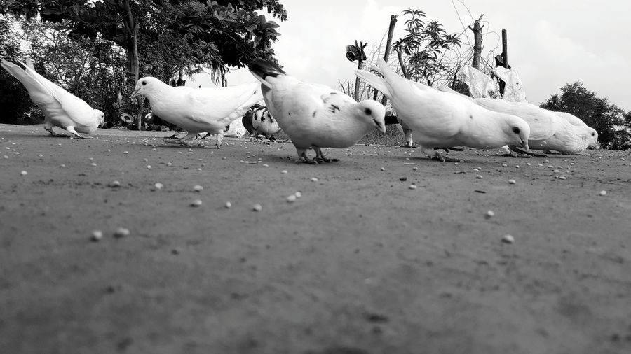 Lucky they let me get the shot.. Exploring Birds Pigeons Avians Monochrome Photography Nature EyeEm Rookie Monochrome Black And White Monochrome Fanatic Monochrome Diaries S6edge Edgephotography Sarfuddin Gujarat India Black And White Friday