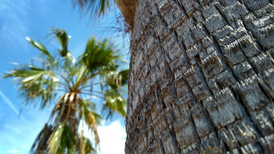 Palm Tree Tree Trunk Tree Low Angle View Textured  Day Nature No People Close-up Outdoors Sky Clear Sky Beauty In Nature