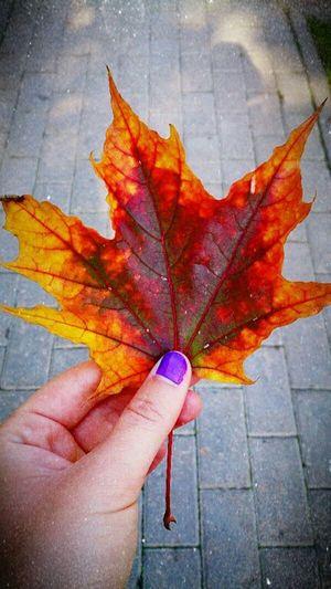 Nature Природа Autumn осень Autumn Leaves осеннеенастроение осенние листья Bright