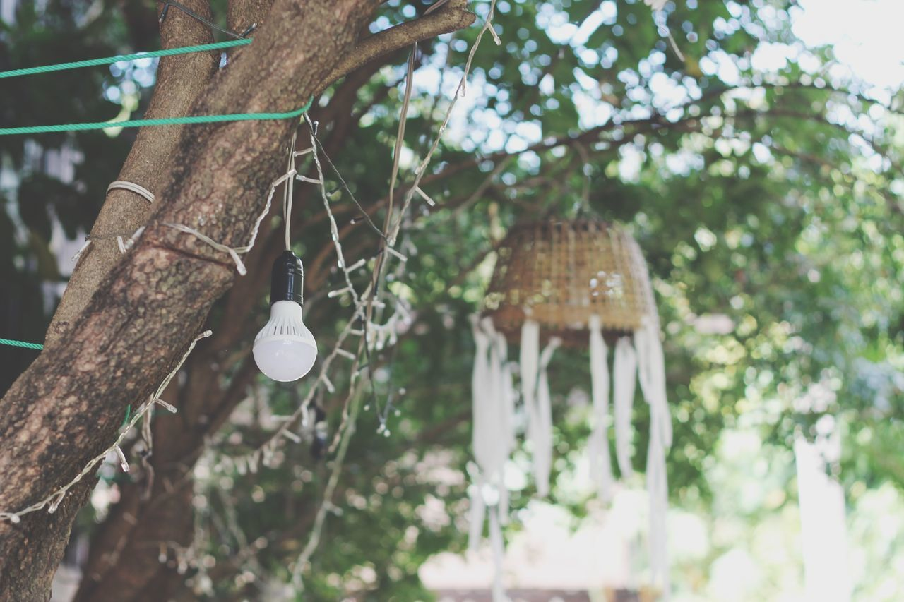 tree, plant, hanging, focus on foreground, no people, nature, growth, day, lighting equipment, built structure, branch, outdoors, wind chime, decoration, low angle view, close-up, architecture, front or back yard, wood - material, selective focus