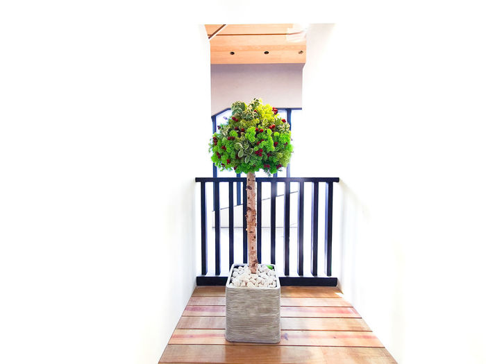 Potted plant on table against building