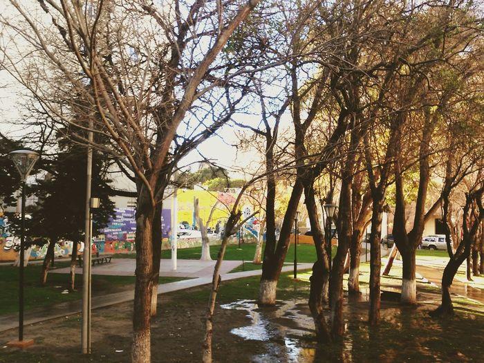 Comodoro Rivadavia Chubut p Plaza Lucania Otoño Oh Otoño Patagonia Argentina Zurda Talking Pictures Taking Photos First Eyeem Photo Urban Spring Fever