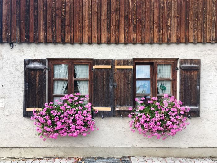 Flower boxes on window of house
