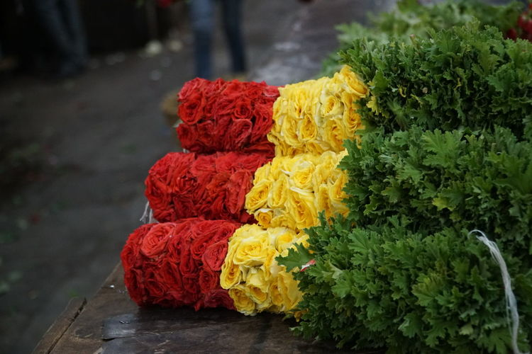 Close-Up Of Multi Colored Flowers For Sale