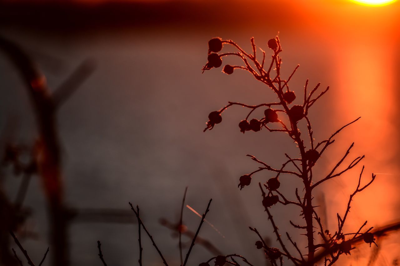 sunset, sun, nature, sky, outdoors, no people, beauty in nature, plant, growth, flower, day