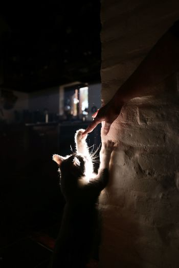 Close-up of hand holding cat in dark room