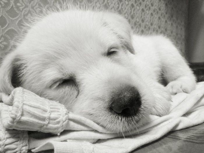Pets Domestic Animals Dog One Animal Animal Themes Dog Love Close-up