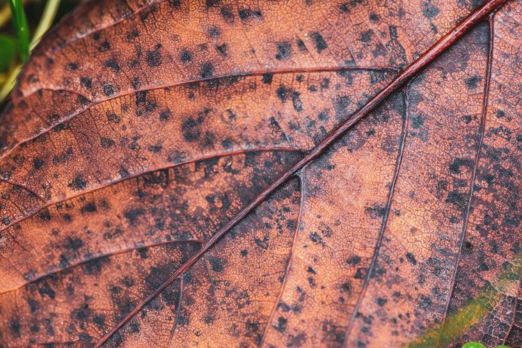 Full frame shot of rusty metal grate