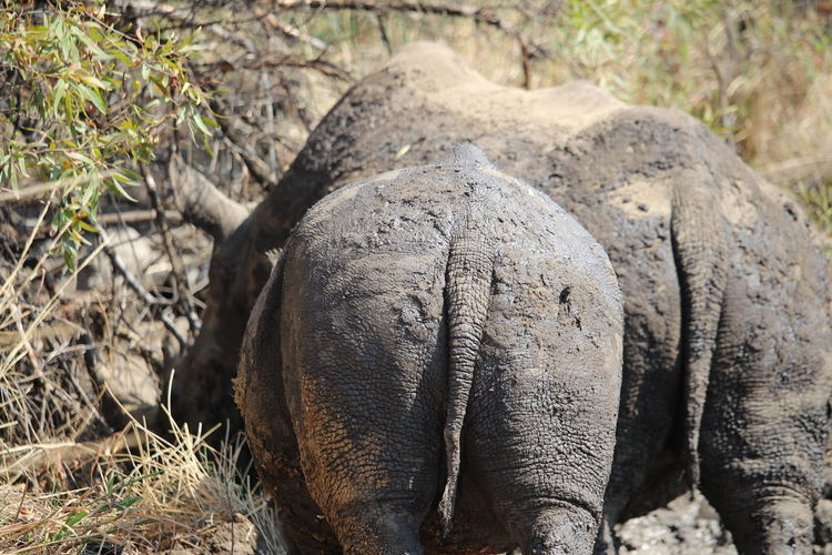 Animal Themes Animals In The Wild Baby Bums Grass Momma Bums Rhinoceros Two Beauties Two Tails