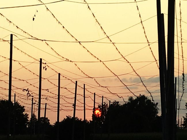Sunset Tree Cable Silhouette Connection No People Power Line  Sky Outdoors Architecture Electricity  Electricity Pylon Built Structure Nature Day Sunset #sun #clouds #skylovers #sky #nature #beautifulinnature #naturalbeauty #photography #landscape