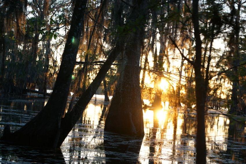 Louisiana Louisianatravel Louisiana Sunsets Swamp Nature TreeTravel Photography Wanderlust Nature Photography Lens Flare Lake Raw Image Sunlight Landscape Outdoors Sunset Vacations No People Tourism Roadtrip Sonyimages Traveling Texan Noedit Nofilter Sony A6000