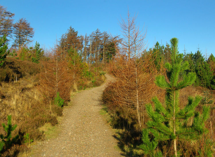 A Walk in Laide Wood Beauty In Nature Bird Habitat Clear Sky Conservation Day Fir Trees Footpath Growth Laide Wood Landscape Nature Nature Reserve No People Outdoors Plant Scenics Scots Pine Trees Scottish Highlands Sunlight The Way Forward Tranquil Scene Tranquility Tree Wester Ross Winter Sunshine