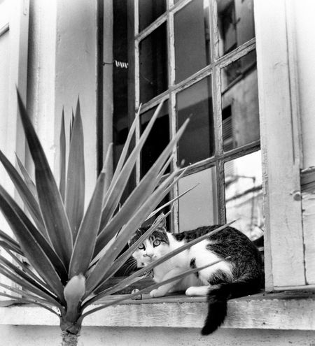 Cats of France (Provence) in Black and White Black & White CAT IN THE SUN Cat Model Cat Watching Cats Of EyeEm Cats 🐱 Fine Art Photograhy Fine Art Photography Relaxed Cat Black And White Black And White Collection  Blackandwhite Blackandwhite Photography Blackandwhitephotography Cat Cat Black & White Cat Lover Cat Lovers Cat Photography Cats Cat♡ Fine Art