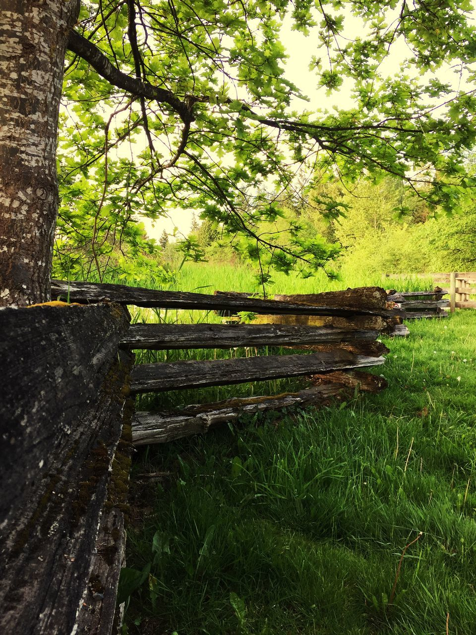 tree, green color, no people, grass, growth, day, nature, outdoors, beauty in nature, tranquility, scenics