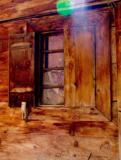 Wood - Material Domestic Animals Entrance Domestic Door Pets Animal Themes House Indoors  Day Vertebrate Architecture Built Structure Brown Mammal Wood No People Animal One Animal
