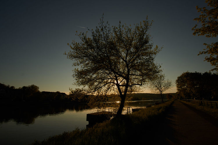 Sunset over river Moselle River Water Sunset Nature Sky Tree Outdoors Tranquility River View Riverside Calm Scenics Beauty In Nature No People Idyllic Tranquil Scene Silhouette Reflection Lake Bare Tree Clear Sky Branch Day