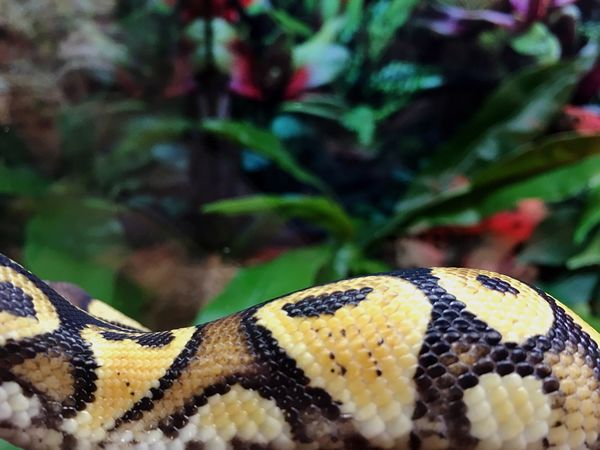 Snake Animal Themes Animals In The Wild One Animal Nature Focus On Foreground Animal Wildlife Close-up Angle Perspective Reptile No People Creative Still Life California