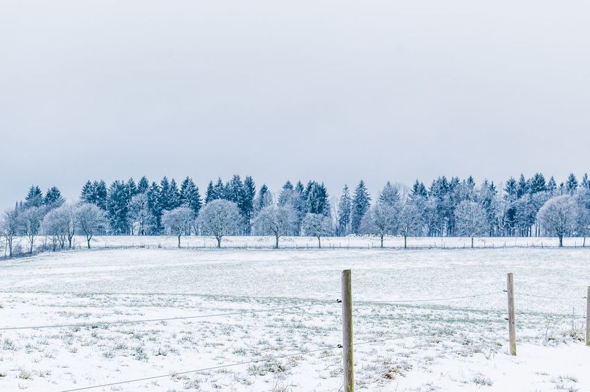 Frozen trees. Cold Temperature Winter Snow Nature Weather Tranquility Tranquil Scene Frozen Beauty In Nature Scenics Cold White Color Tree Landscape Outdoors Field Day Copy Space No People Snowing Shades Of Winter