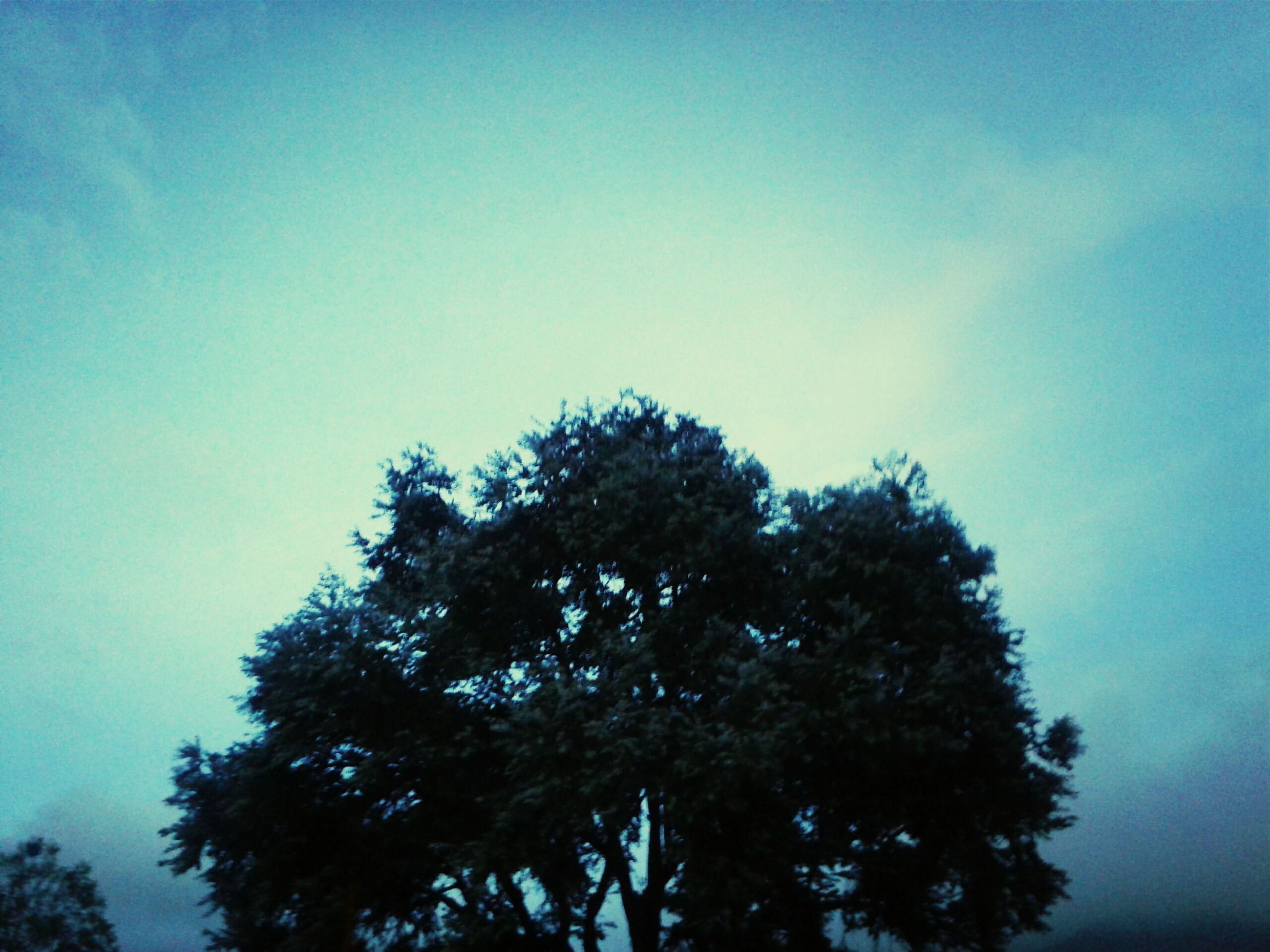 tree, low angle view, blue, tranquility, growth, beauty in nature, clear sky, nature, sky, scenics, tranquil scene, copy space, branch, treetop, high section, silhouette, outdoors, no people, day, idyllic