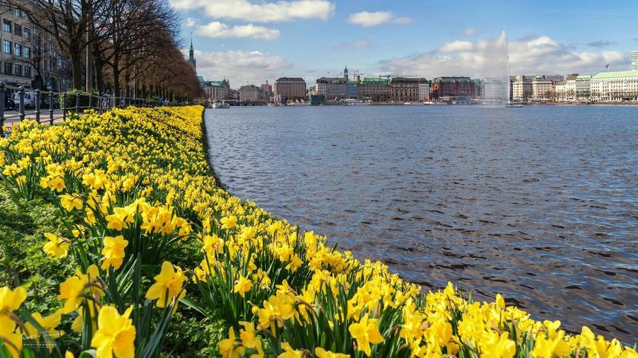 View of yellow flowers in city
