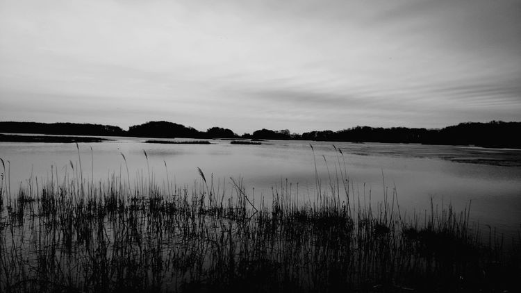 Marshland Tranquility Water Marsh Scenics Outdoors No People Nature Beauty In Nature Day Black And White Photography