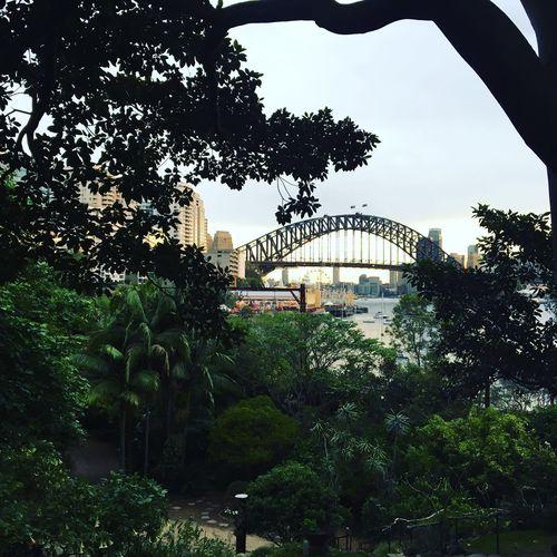 Sydney Harbour Bridge Sydney Australia Harbour View Bridge View Lavendar Bay Look Out Scenery Viewpoint Wendy's Secret Garden Secret Spot