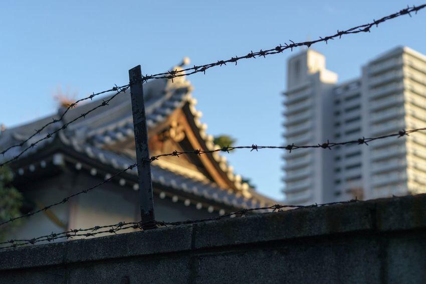 Here Belongs To Me Tokyo,Japan Tokyo Tokyo Street Photography Japan Japanese Temple Taking Photos Streetphotography Street Photography Sony α♡Love Sonyalpha Sony Zeiss SONY A7ii City Life Machiya