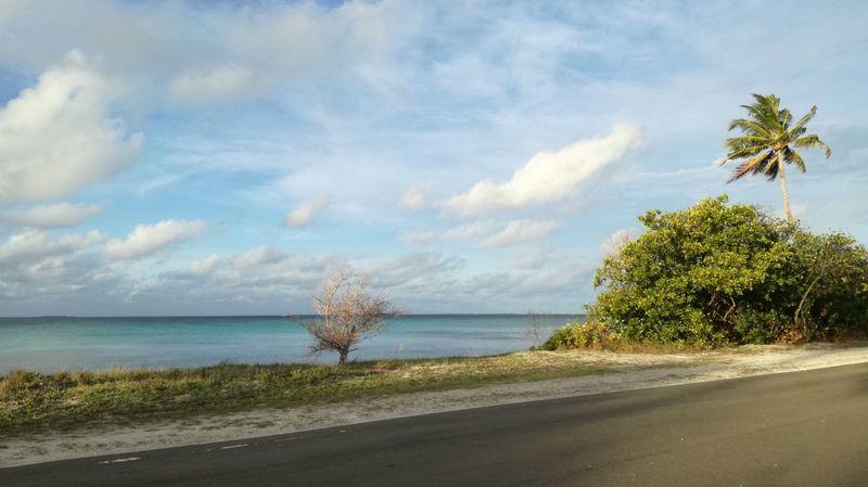No worries... Sea Tree Cloud - Sky Day No People Maldives My Maldives