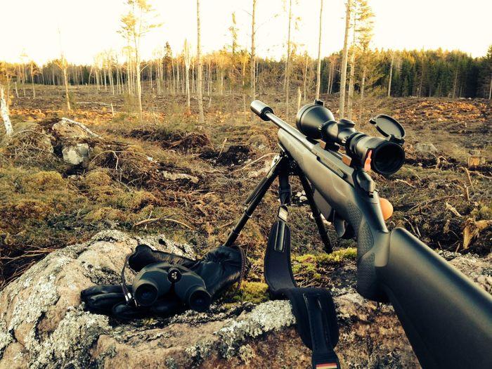 Hunting Wating Silence Wildlife & Nature