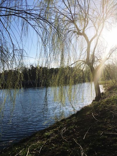 Nearly Sunset Plant Water Tree Tranquility Tranquil Scene Nature Bare Tree No People Lake Non-urban Scene Scenics - Nature Grass Flowing Water Outdoors Branch Day