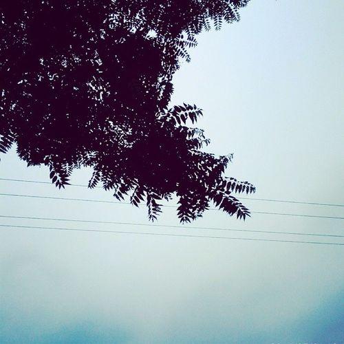 Shape. Tree Leafage Leaf 树 树叶light sky bnw bnwbutnot instadaily picoftheday bestoftheday blue bluesky summer wind me