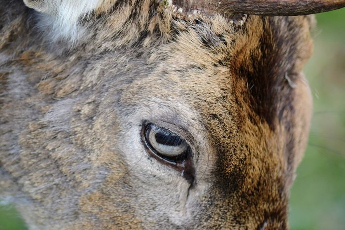 One Animal Close-up Animal Themes Animal Head  Animal Body Part Focus On Foreground Outdoors Mammal Day Animals In The Wild Animal Wildlife No People Domestic Animals Nature Portrait