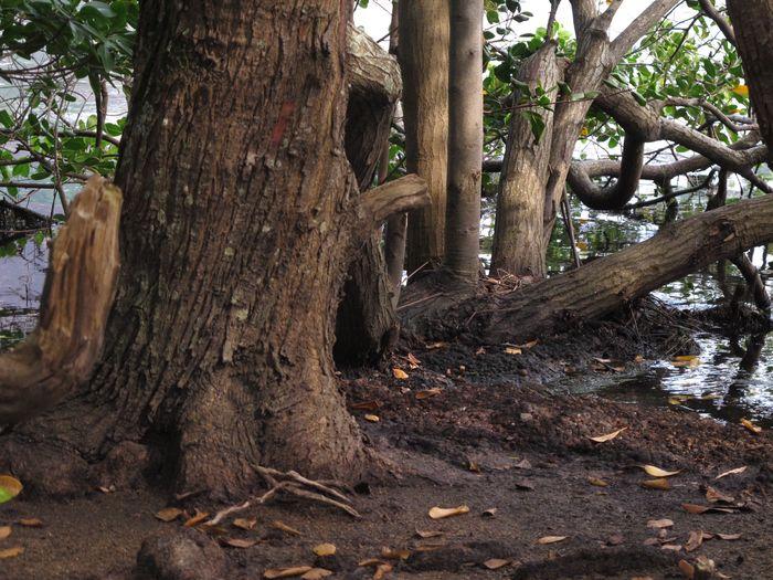 Tudo misturado Tree Trunk Tree Nature Root Outdoors Growth No People Beauty In Nature