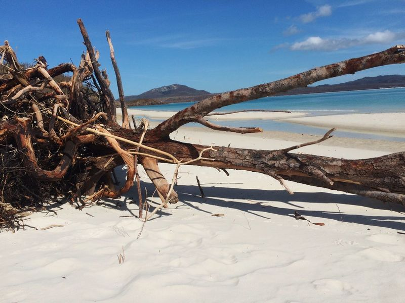 Beach Water Tree Trees And Nature Nature White Beach Trees And Water Trees And Sun Trees #leaves Trees Falling Whitehaven Beach