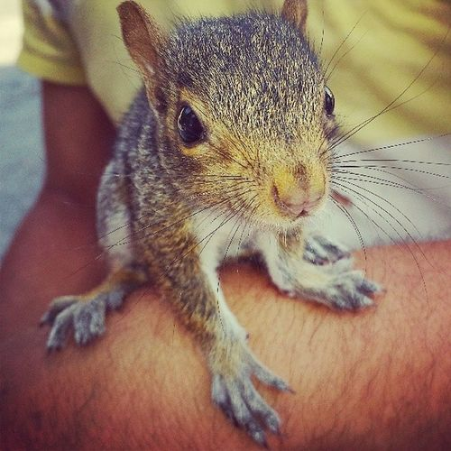 A Gift From My Love ♥ Squirrel Pet SeLLamaPrisca Prisca