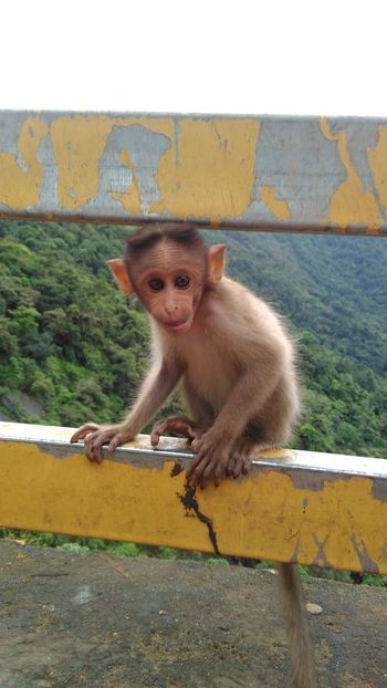 Close-up Cute Day Focus On Foreground Mammal Monkey Nature No People Outdoors Portrait Sanku Photography Wayanad
