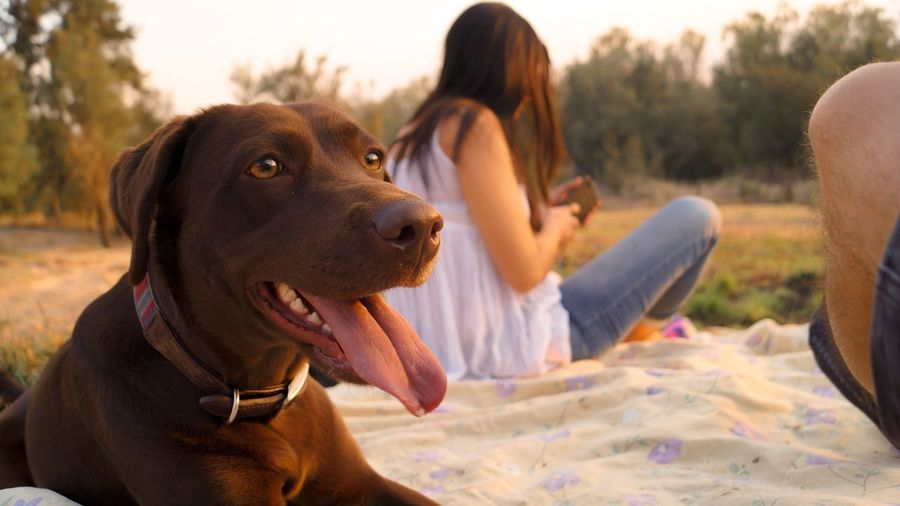 Dog looking away while sitting against woman in park