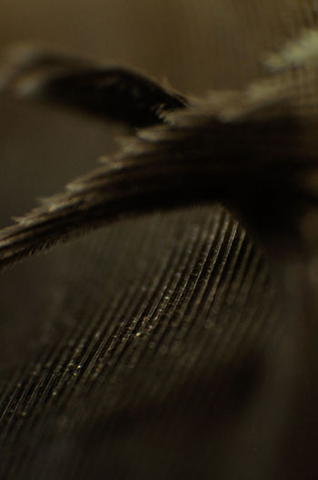 Close-up Fly Fragilty Indoors  Macro Macro Photography Macro_collection Natural Pattern No People Texture Wing