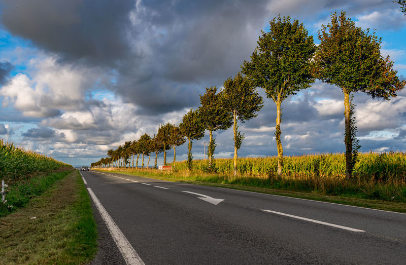 Empty road amidst trees on field against sky