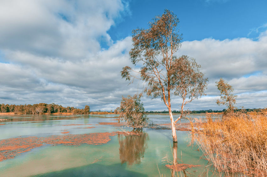 Murray River flooding and covering tree trunks. Riverland, South Australia Gum Tree Murray River Riverland South Australia Beauty In Nature Cloud - Sky Day Environment Growth Lake Landscape Mallee Murray Nature No People Non-urban Scene Outdoors Plant Reflection River Scenics Scenics - Nature Sky Tranquil Scene Tranquility Tree Water