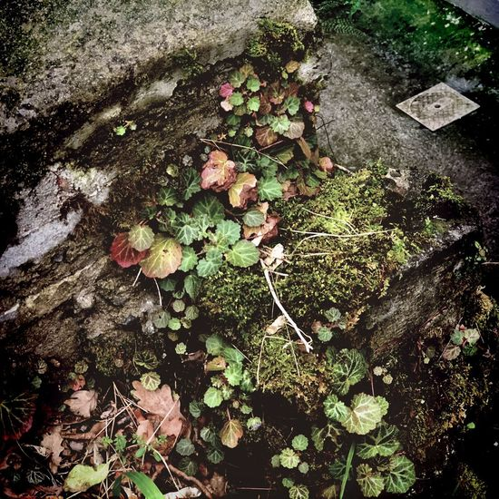 Plants On The Wall Urban Microgarden Nature Moss High Angle View Growth