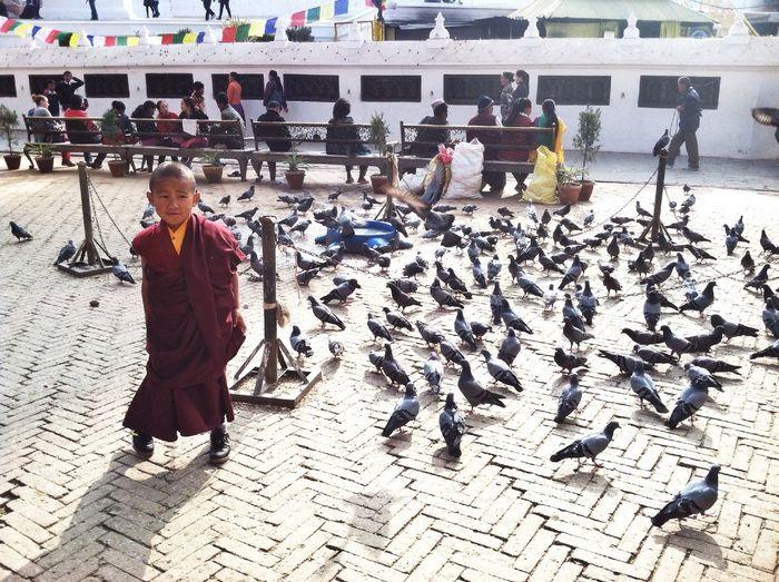 Portrait Streetphotography Tibetan  Monk  Traveling People IPhoneography Kathmandu, Nepal Travel Birds