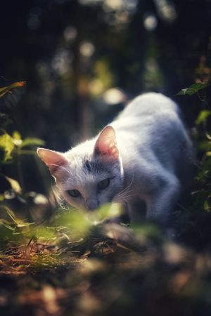 EyeEm Best Shots The Week on EyeEm Morning Light Kitten Cat Kitty Beautiful Cat My Pet White Cat Outdoor White Cat Light And Shadow White Cat Outdoor Pet Portraits White Pet Cat White Cat In The Shade Cat Walking Pets One Animal Domestic Animals Mammal Animal Domestic Cat Animal Themes Nature Cute Portrait No People Close-up Day Outdoors