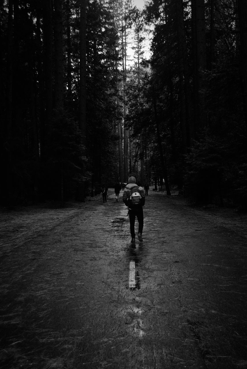 tree, full length, real people, one person, walking, forest, rear view, the way forward, road, growth, day, outdoors, adventure, nature, men, one man only, adult, people